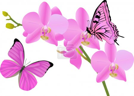 Illustration for Illustration with orchid flowers and butterflies on white background - Royalty Free Image