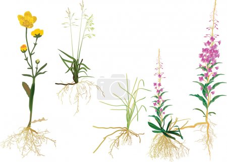 Illustration for Illustration with wild plants isolated on white background - Royalty Free Image