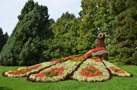 Flower peacock sculpture. Mainau island, Germany