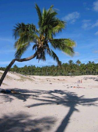 Palm tree and its shadow on a sandy beach