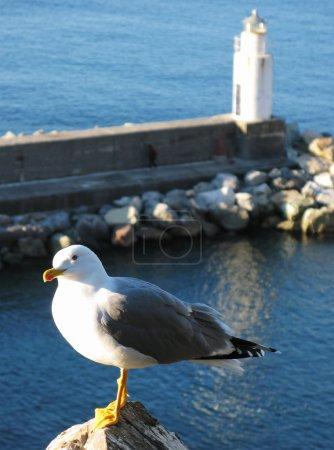 Seagull against pharos. Camogli, Italy
