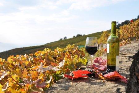 Vin rouge et une branche de raisin sur la terrasse vignoble à Lavau