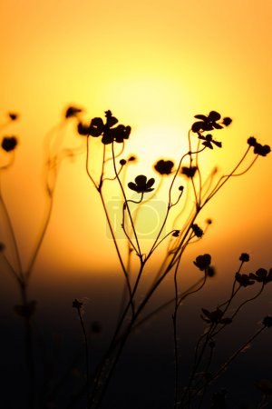 Photo for Grass landscape in the wonderful sunset light - Royalty Free Image