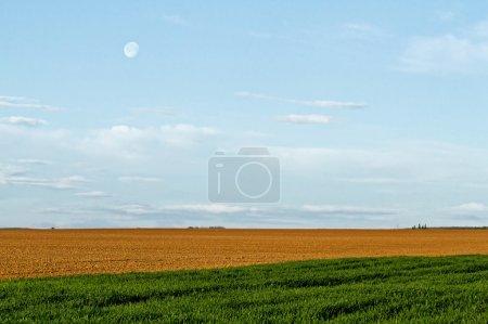Foto de Paisaje agrícola con cielo azul - Imagen libre de derechos