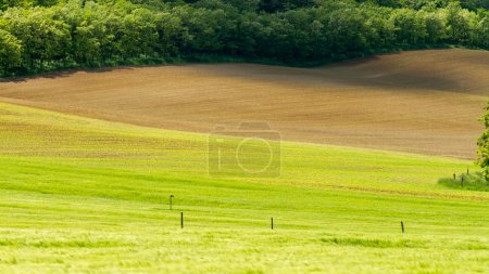 Photo for Beautiful arable land in a sunny,windy day - Royalty Free Image