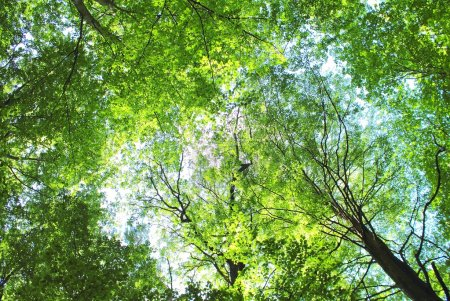 Photo for Forest trees leaves background - Royalty Free Image