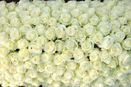 Photo for Big group of white roses, part of wedding decorations - Royalty Free Image