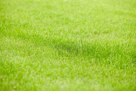 Photo pour Fond d'herbe - image libre de droit