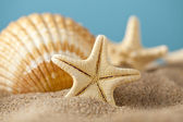 Starfish and seashells on beach