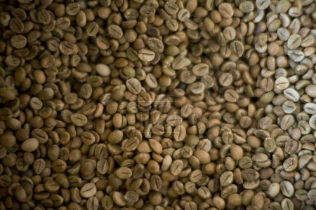 Photo for A pile of green coffee beans background - Royalty Free Image