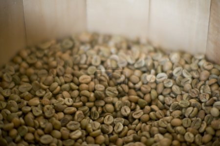 Photo for A pile of green coffee beans unroasted - Royalty Free Image