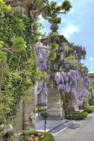 Foto de Glicina ceñido, puertas en el parque de mirabell - Imagen libre de derechos