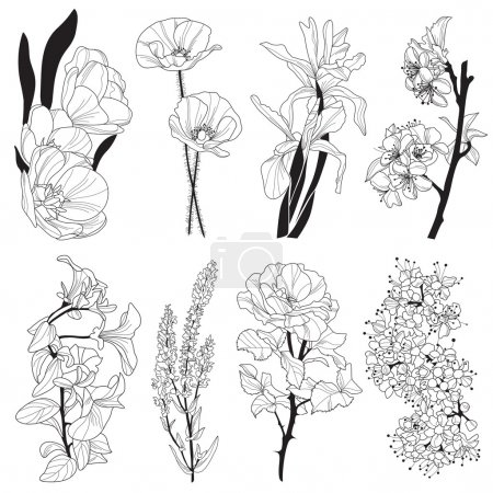 Illustration for Set of hand drawn decorative flowers: tulip, iris, poppy, cherry, viola, rose, design elements - Royalty Free Image