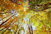 Autumn, fall trees. Sun shining through colorful leaves