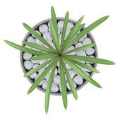vue de dessus du cactus plante en pot, isolé sur fond blanc