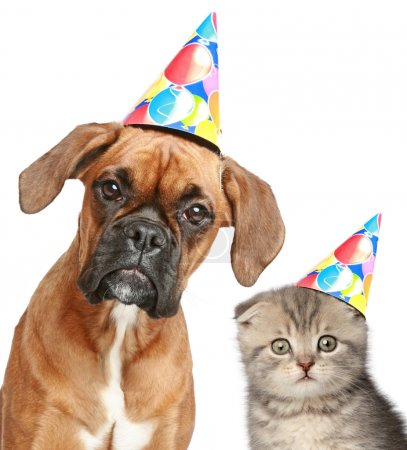 Dog and cat in party cap on white background
