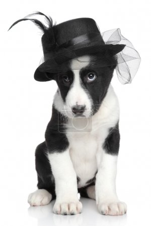 Central Asian shepherd puppy in fashionable hat