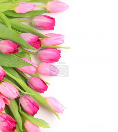 blank with tulips