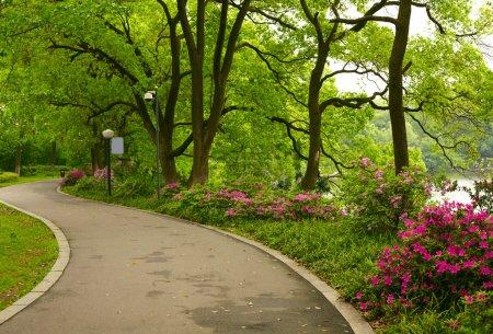 Photo pour Route du parc d'été - image libre de droit