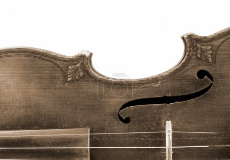 Photo for Part of violin on white background - Royalty Free Image