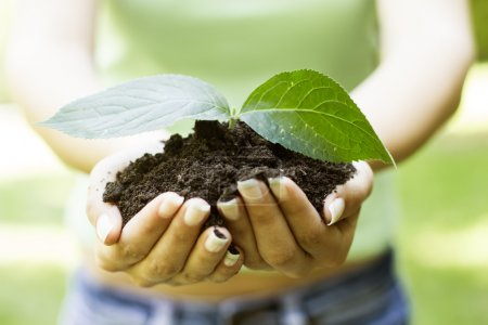 Photo for Human hands holding a handful of soil. - Royalty Free Image