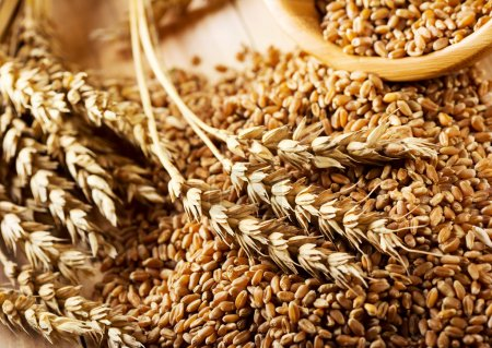 Photo for Wheat grains on wooden table - Royalty Free Image