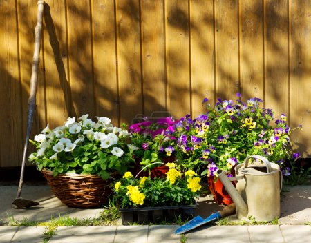 Photo for Summer flowers with garden tools - Royalty Free Image