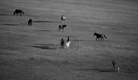 black and white meadows with horses