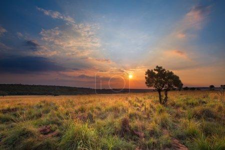 Photo pour Coucher de soleil magique en Afrique avec un seul arbre sur une colline et nuages minces - image libre de droit