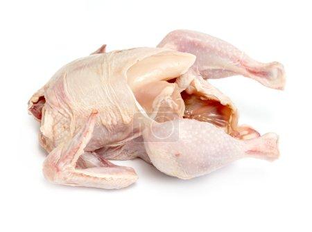 Bird chicken meat on a white background