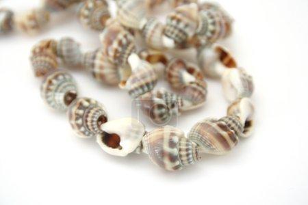 beads shell