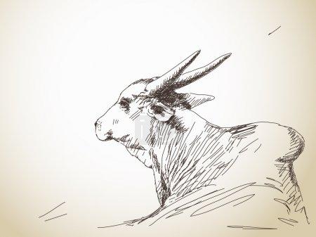 Zebu cow portrait with big horns, Hand drawn sketc...