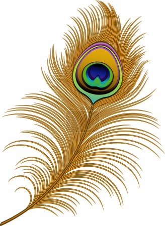Illustration for Peacock Feather over white. EPS 10, AI, JPEG - Royalty Free Image