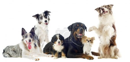 Group of Dogs