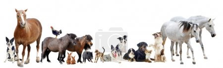 Group of farm animals and pets in front of white b...