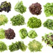 Varieties of salads in front of white background...