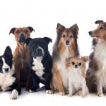 Постер, плакат: Six dogs