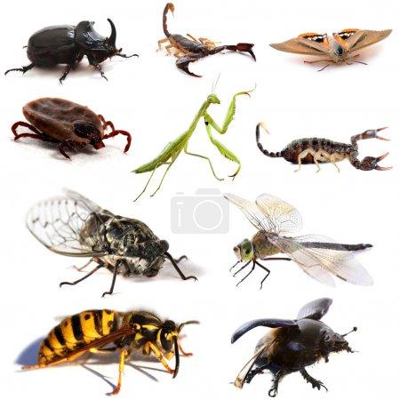 Photo pour Insectes et scorpions devant fond blanc - image libre de droit