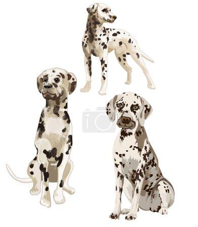 trois Dalmatiens