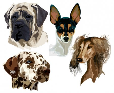 Four different breeds of dog muzzles