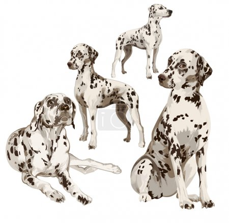 Two puppies and two adult Dalmatians