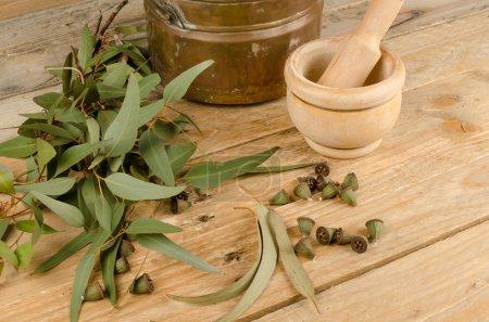 Photo pour Nature morte affichant l'eucalyptus comme ingrédient médicinal naturel - image libre de droit