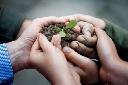 Photo pour Mains tenant la plante dans le sol - image libre de droit