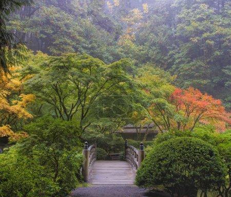 Foto de Mañana nublada en jardín japonés con puente peatonal de madera durante la temporada de otoño - Imagen libre de derechos