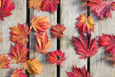 "Постер, картина, фотообои ""японский клен листья на Дерево палуба"""