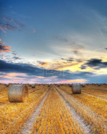 Photo pour Beau coucher de soleil sur un champ avec des balles de foin . - image libre de droit