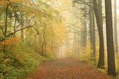 Autumn forest on a misty morning