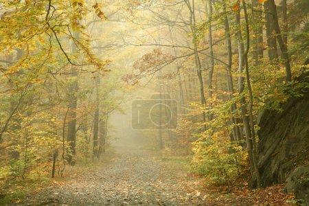 Photo pour Sentier forestier par une matinée d'automne brumeuse . - image libre de droit