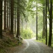 Forest trail in a misty rainy weather, September....