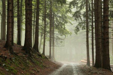 Photo pour Sentier en forêt, temps brumeux, à la fin septembre, Pologne. - image libre de droit